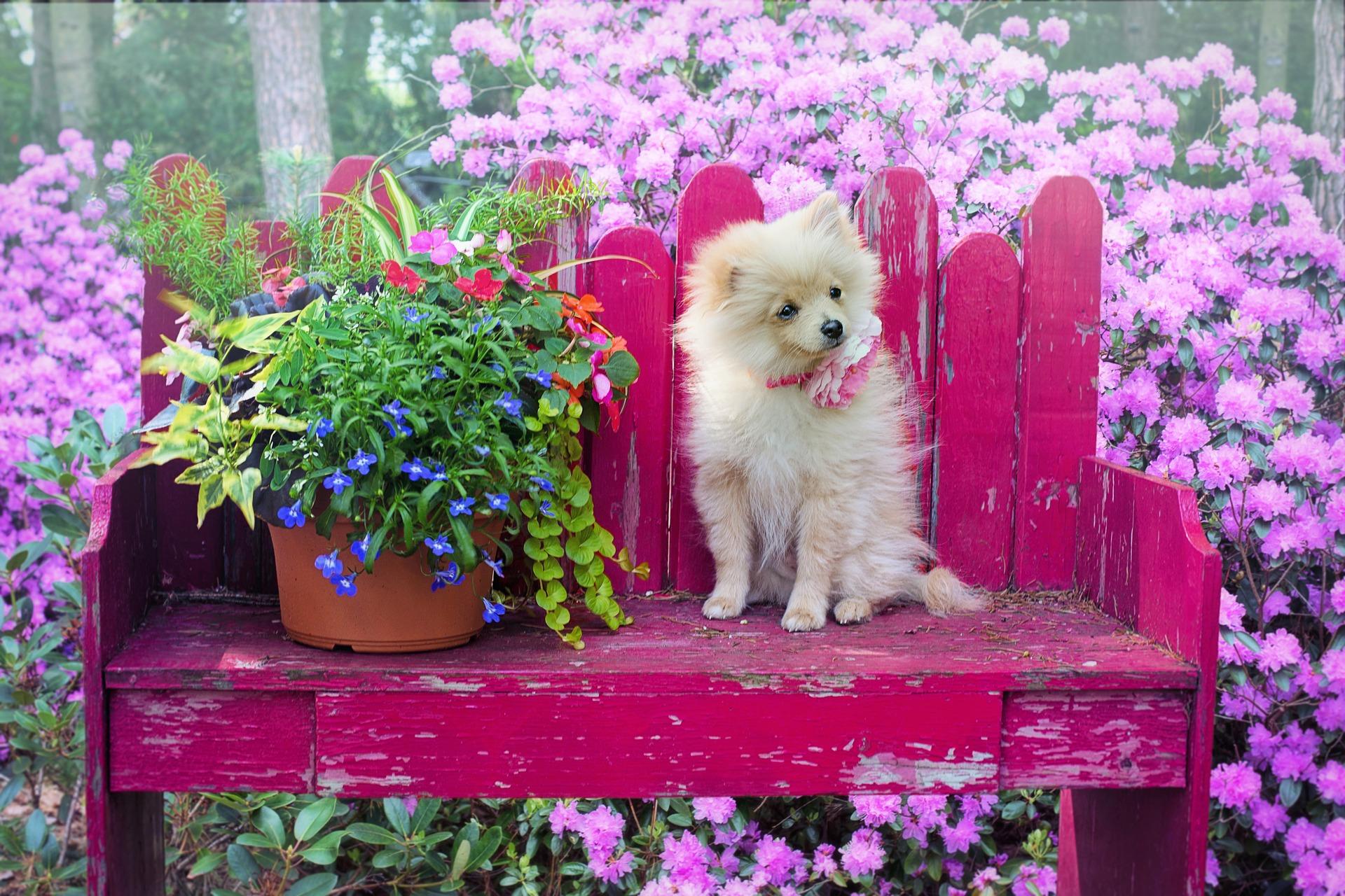 ベンチに座った犬